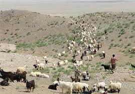 خرید تضمینی ۲۰۰ هزار راس دام عشایر خراسان شمالی آغاز شد