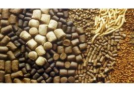 توزیع 3800 تن خوراک دام بین دامداران سوادکوه