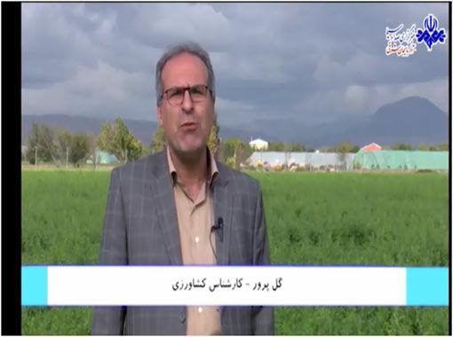 ارزشافزوده ۱۶۰ میلیارد ریالی توصیههای هواشناسی برای کشاورزی آذربایجانشرقی