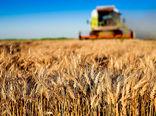 تولید 670  هزار تن گندم در آذربایجان شرقی در سال جاری
