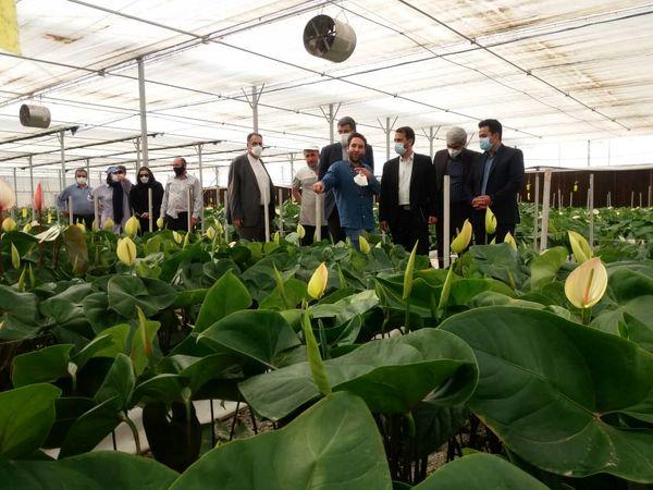 بازدید رئیس سازمان جهاد کشاورزی استان تهران از شهرک گلخانهای حصارگلی شهرستان ورامین