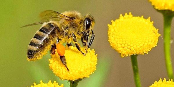 برگزاری کارگاه آموزشی - ترویجی زنبور عسل در شهرستان تنگستان