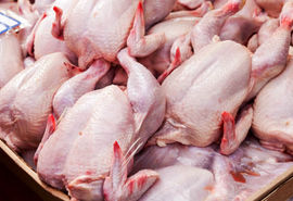 سالانه 70 هزار تن گوشت مرغ در مرغداری های استان قزوین تولید می شود