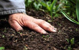 آییننامه اجرایی خاک به زودی تحویل دولت میشود/ آغاز تهیه دستورالعمل اجرایی مدیریت بهینه خاک برای پروژه رودخانه های مرزی، دشت سیستان و...