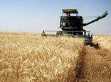 برداشت بیش از 41 هزارتن گندم در فیروزآباد