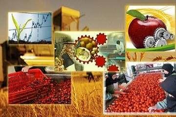 اختصاص ۱۴ پروژه نقشه جهش تولید بخش کشاورزی زنجان