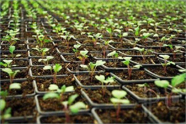 دارویی که از خاک میروید/ کشت ۲۰ گونه گیاه دارویی شاخص در کردستان