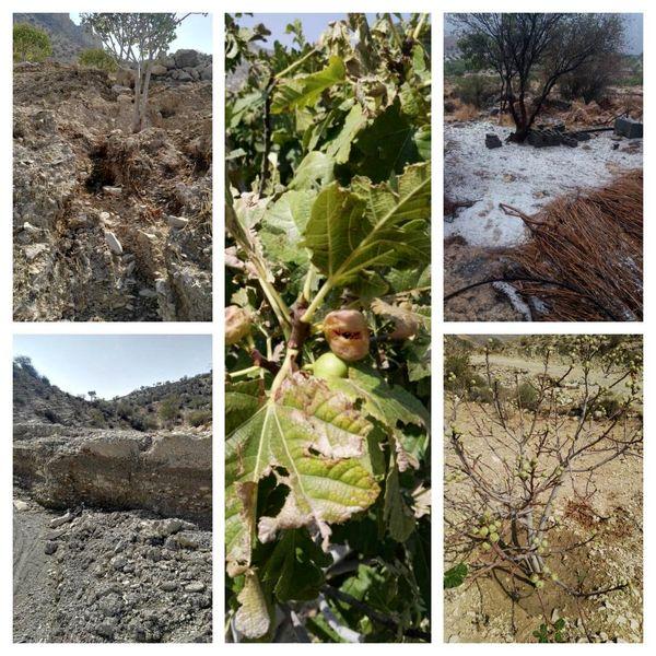 خسارت ۴۰۰ میلیاردی سیل به باغهای جهرم