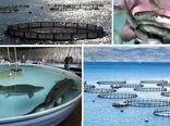 استفاده از تکنولوژیهای جدید برای افزایش راندمان تولید ماهی تیلاپیا