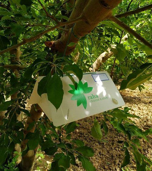 ایجاد سایت الگویی محصول گواهی شده سیب در مرودشت