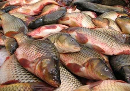 تولید بیش از ۲۴۰۰ تن ماهی در البرز