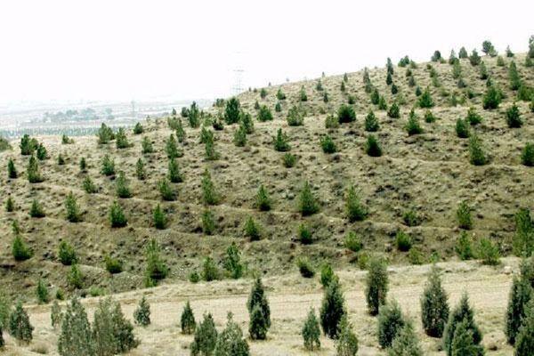 ۲۰۰ هکتار جنگل کاری در تویسرکان
