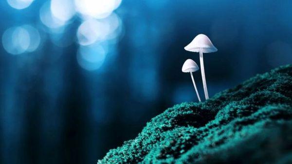 تاثیر نوعی قارچ بر درمان افسردگی