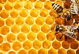 رشد 15 درصدی تولید عسل در استان زنجان