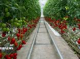 تولید سالانه هفت هزار و ۲۴۰ تن انواع محصولات کشاورزی گلخانهای در کردستان
