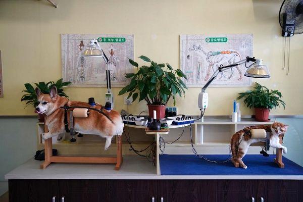 درمان گربهها و سگها با طب سوزنی