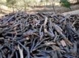 کشف 70 تُن چوب و ذغال قاچاق در چهارمحال و بختیاری