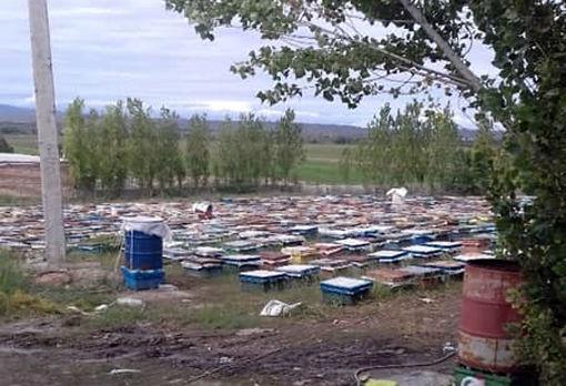 تولید سالانه 2175 تن عسل توسط زنبورداران شهرستان خداآفرین