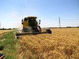 پیشبینی برداشت 1680تن گندم از مزارع شهرستان دماوند