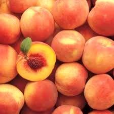 برداشت 450 تن هلو از باغات شهرستان راور در سال جاری