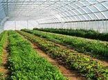 رییس سازمان جهاد کشاورزی خراسان شمالی بر ضرورت توسعه گلخانهها تاکید کرد