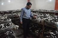 سربازان نیروی انتظامی بهارستان شیوه های پرورش قارچ خوراکی را فراگرفتند