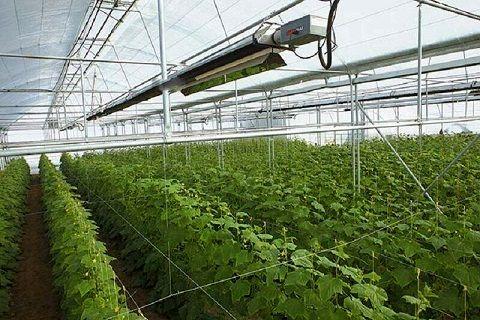 81 پروژه کشاورزی در استان مرکزی آماده بهره برداری