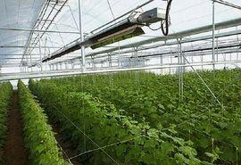 لزوم توسعه کشت گلخانهای در شاهرود