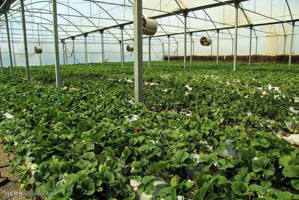 ایجاد چهار شهرک کشاورزی در شهرستان کیار