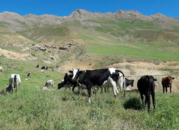 ۳۰ هزار هکتار از مراتع استان قزوین امسال ممیزی میشوند