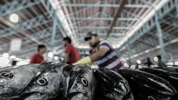 افزایش 18 درصدی صادرات آبزیان در 6 ماهه اول امسال