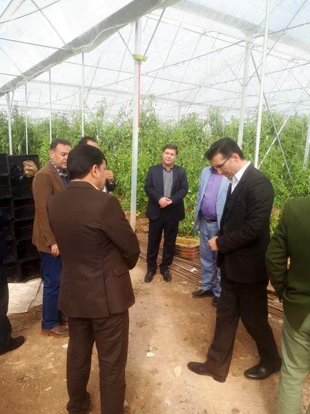 لزوم تسهیلگری در سرمایهگذاری برای توسعه احداث شهرکهای گلخانهای