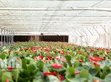 خسارت 3470 میلیارد تومانی «کرونا» به گلخانهها، گیاهان دارویی و قارچ خوراکی در دو ماه اخیر