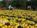 سهم 47 درصدی محصولات باغی از صادرات بخش کشاورزی