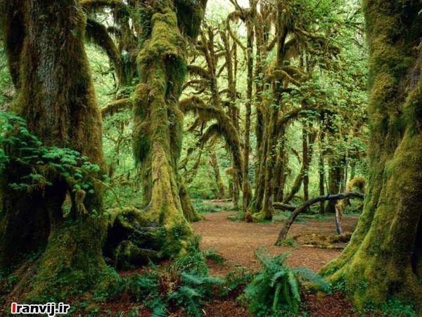 کشاورزی تجاری بخش های بزرگی از جنگل های استوایی را از بین برد