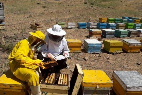 ۲ هزار و ۱۰۰ تن شکر بین زنبورداران خراسان شمالی توزیع شد