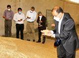 بازدید رئیس سازمان جهاد کشاورزی استان لرستان از مزارع بذری و شرکت خرید کننده بذر مادری شهرستان پلدختر