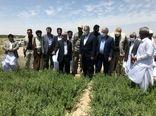 وزیر جهاد کشاورزی از مزارع حنا در شهرستان دلگان بازدید کرد