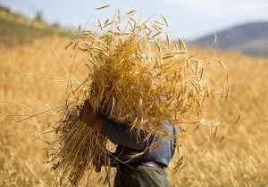 خرید تضمینی 685 هزار تن گندم در کردستان