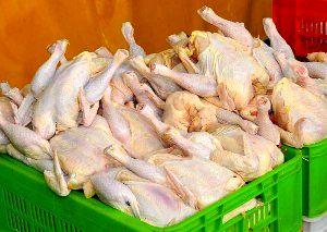 تولید 14748 تن گوشت سفید در واحدهای صنعتی پرورش طیور در خراسان شمالی