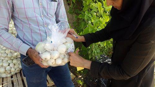 دریافت  59 پروانه استاندارد تشویقی توسط کشاورزان فارس
