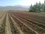 آغاز کشت سیبزمینی در اراضی کشاورزی  شهرکرد
