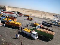 افزایش 25 درصدی صادرات محصولات کشاورزی در 4 ماهه امسال
