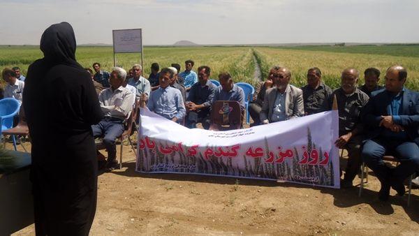 برگزاری روز مزرعه گندم در یزد