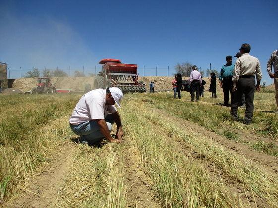۲۳ هزار هکتار کشاورزی حفاظتی در سمنان انجام میشود