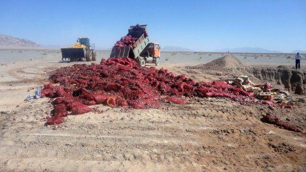 کشف وامحاء محموله میوه قاچاق در یزد