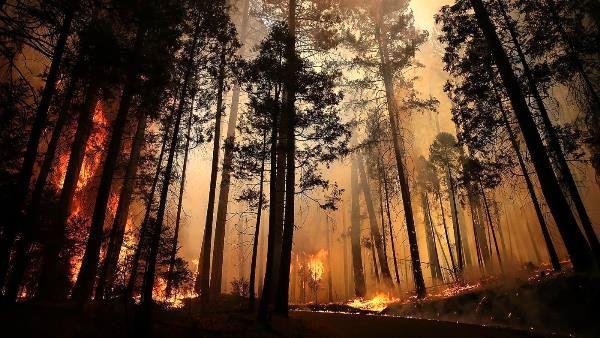 5 درصد آتشسوزیهای اراضی ملی عمدی است