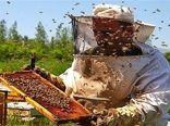 ناکامی زنبورداران اصفهانی در تولید عسل