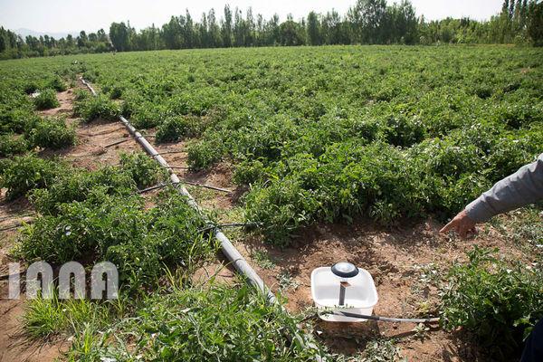 ۹۵ پروژه کشاورزی همزمان با دهه فجر در زنجان افتتاح میشود