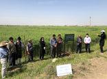 برگزاری بازدید ترویجی از مزارع نمایشی کلزا در شهرستان بناب